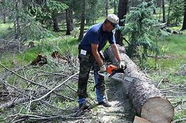 man cutting log with chainsaw