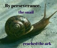 Snail pic: By perseverance the snail reached the ark