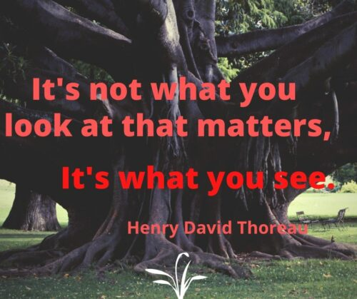 Thoreau saying: It's not what you look at that matters, it's what you see